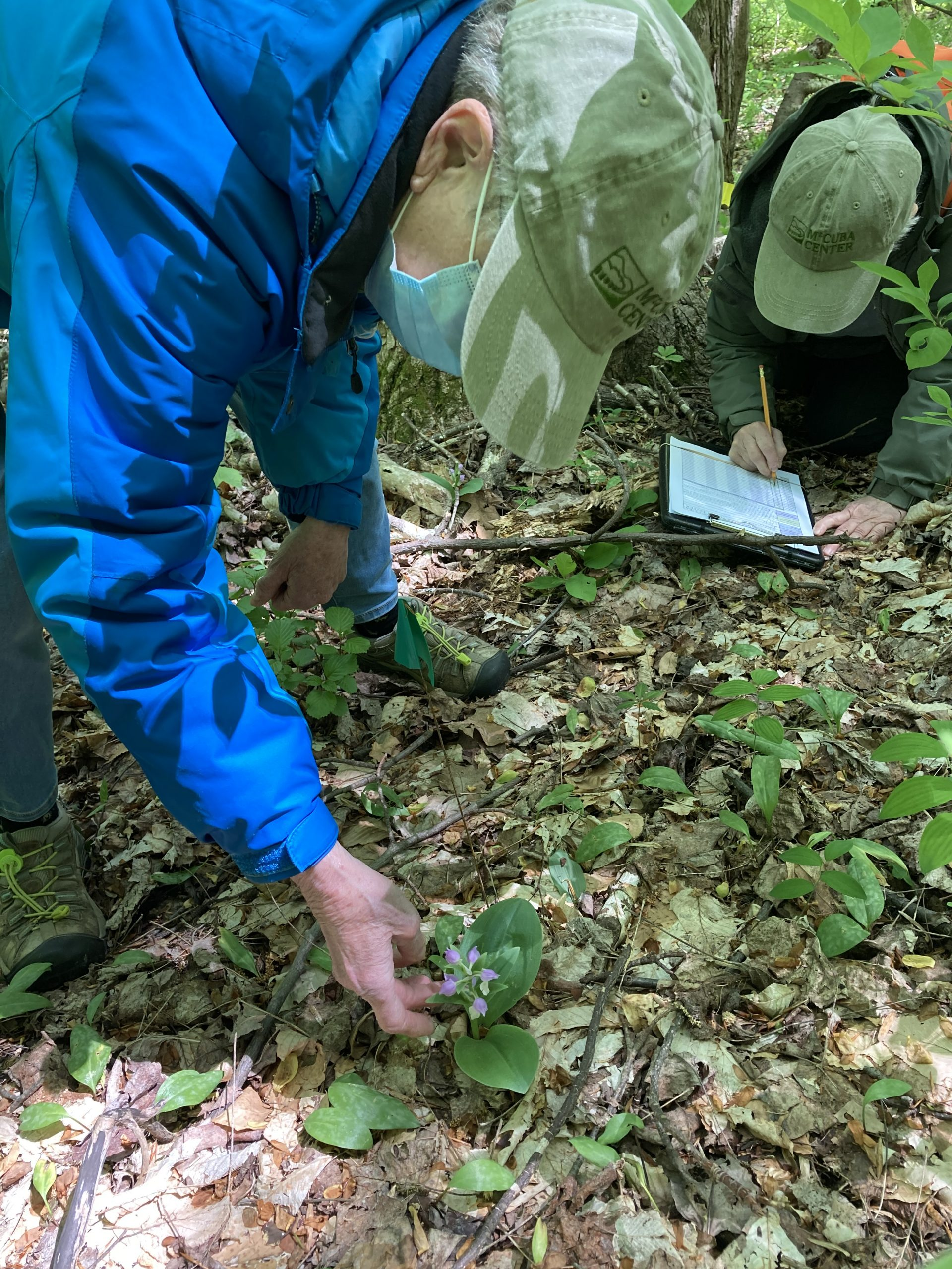 Image of Mt. Cuba Center Citizen Science Projects