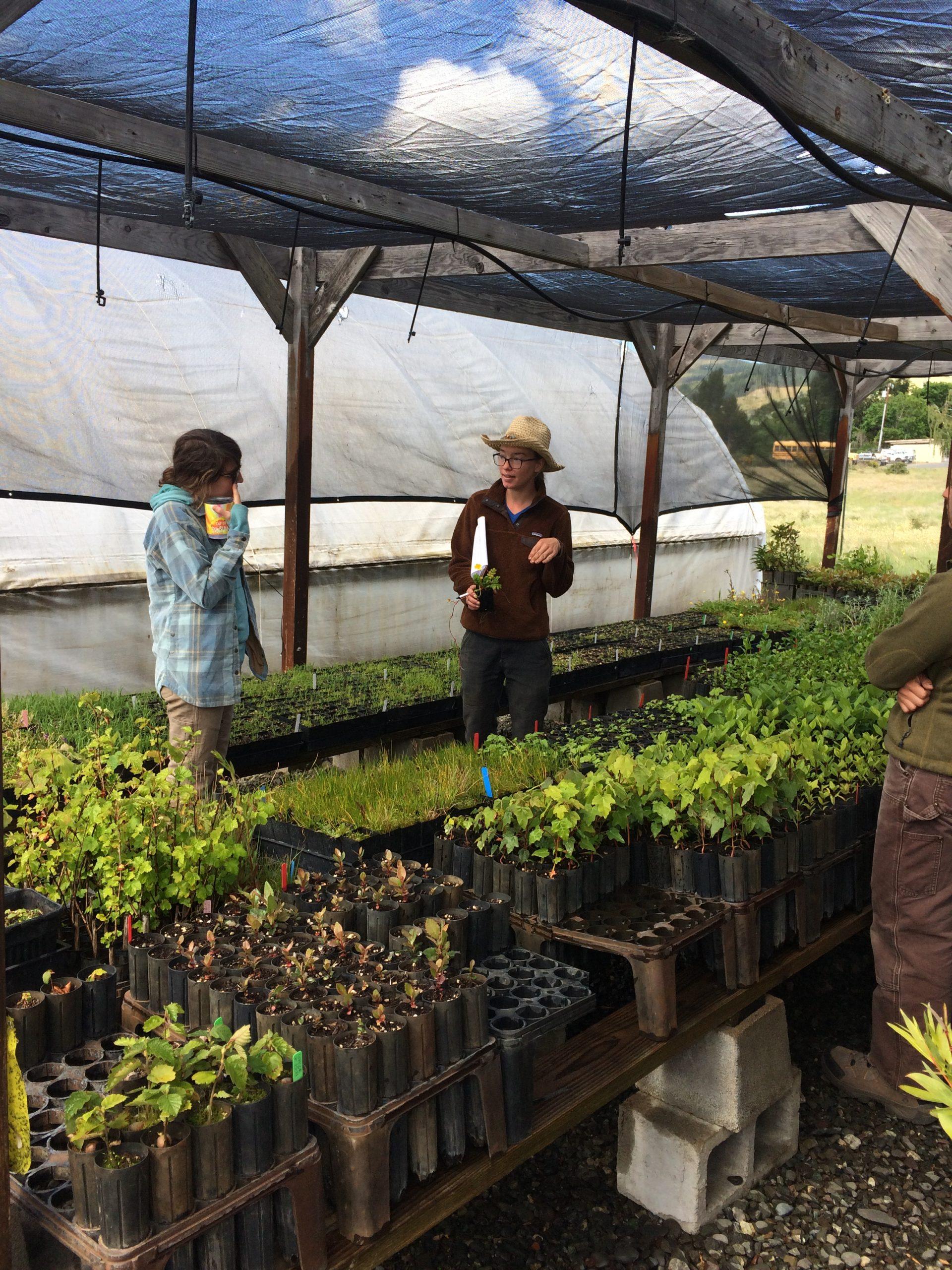 Image of the Native Plant Nursery. By Flora Brain