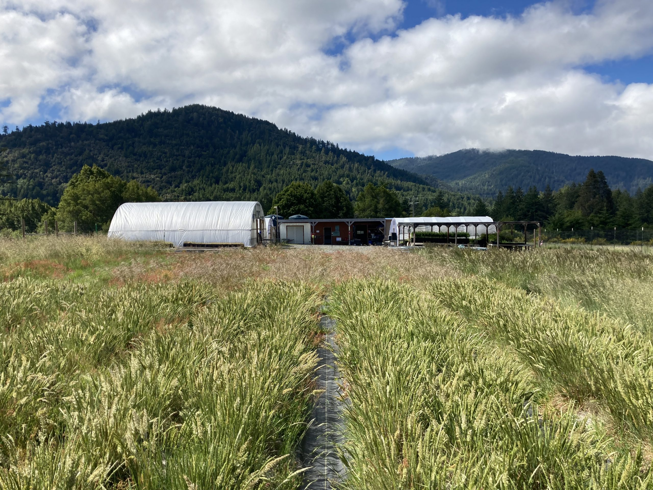 Image of MRC's Native Plant Nursery and Seed Farm, Spring 2021 by Veronica Yates