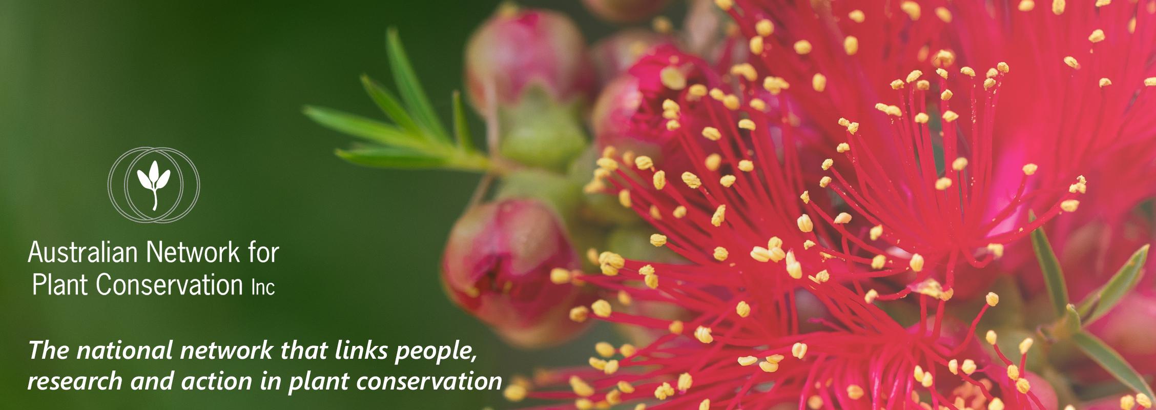 Australian Network for Plant Conservation (ANPC) Inc. logo