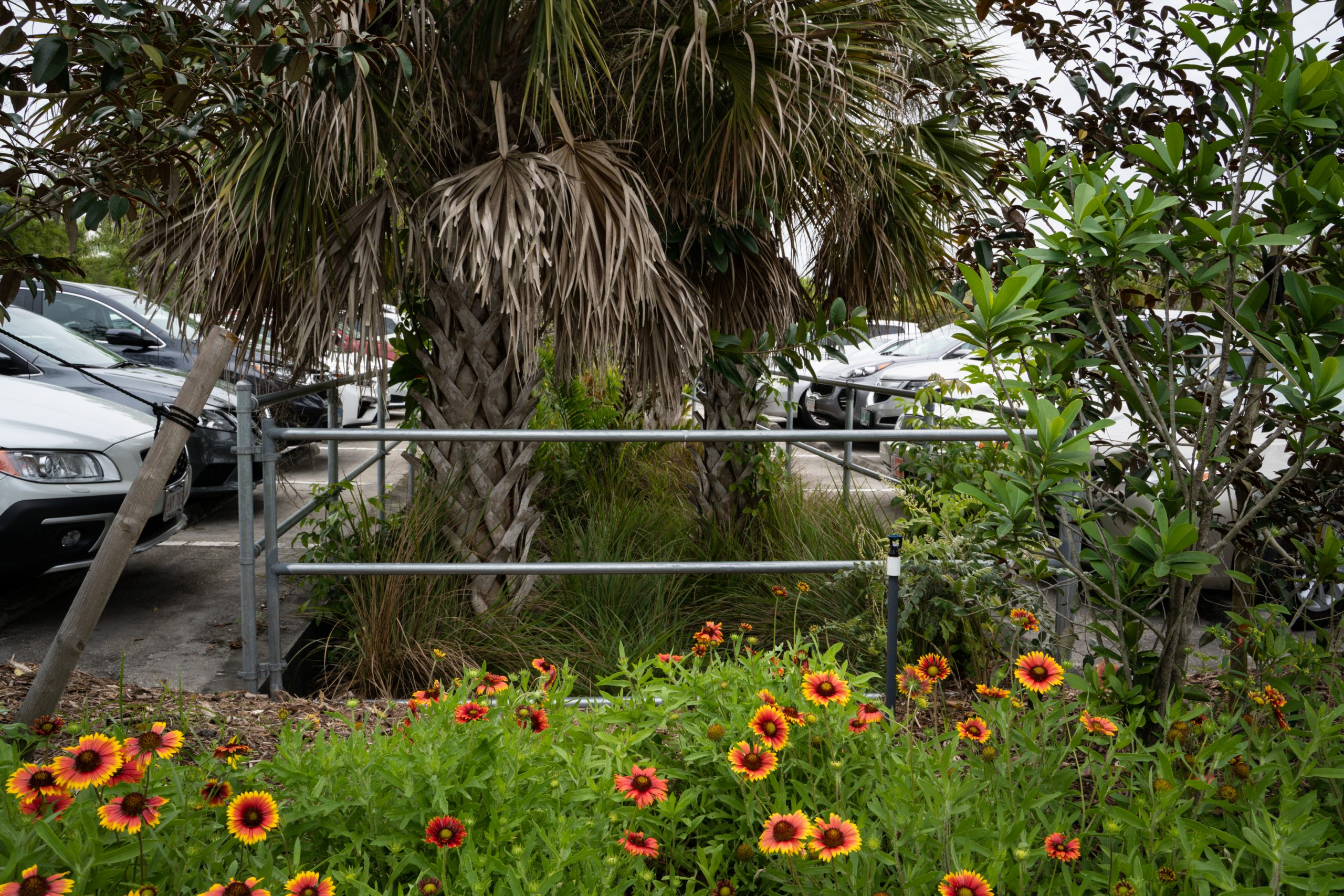 Image of swales that collect rainwater in Naples Botanical Garden's parking lot