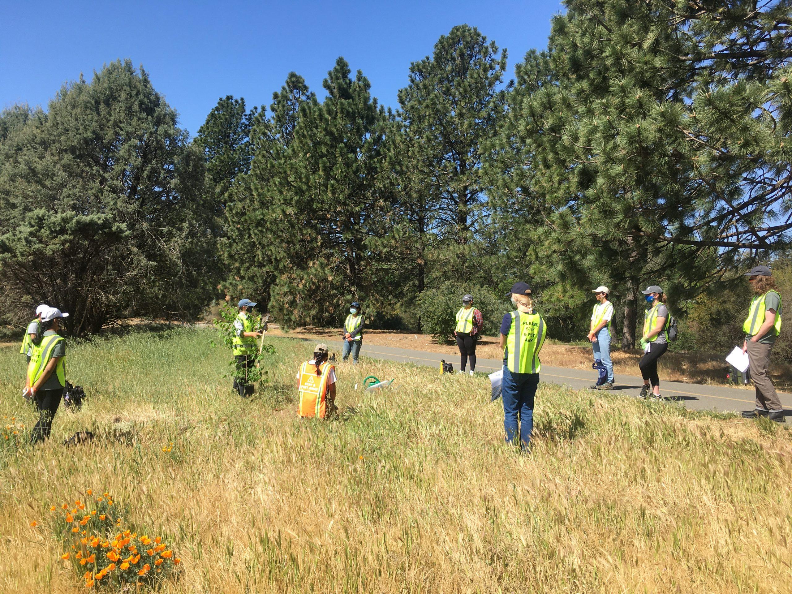 Image of UCDAPG interns planting trees. Photo courtesy of UC Davis.