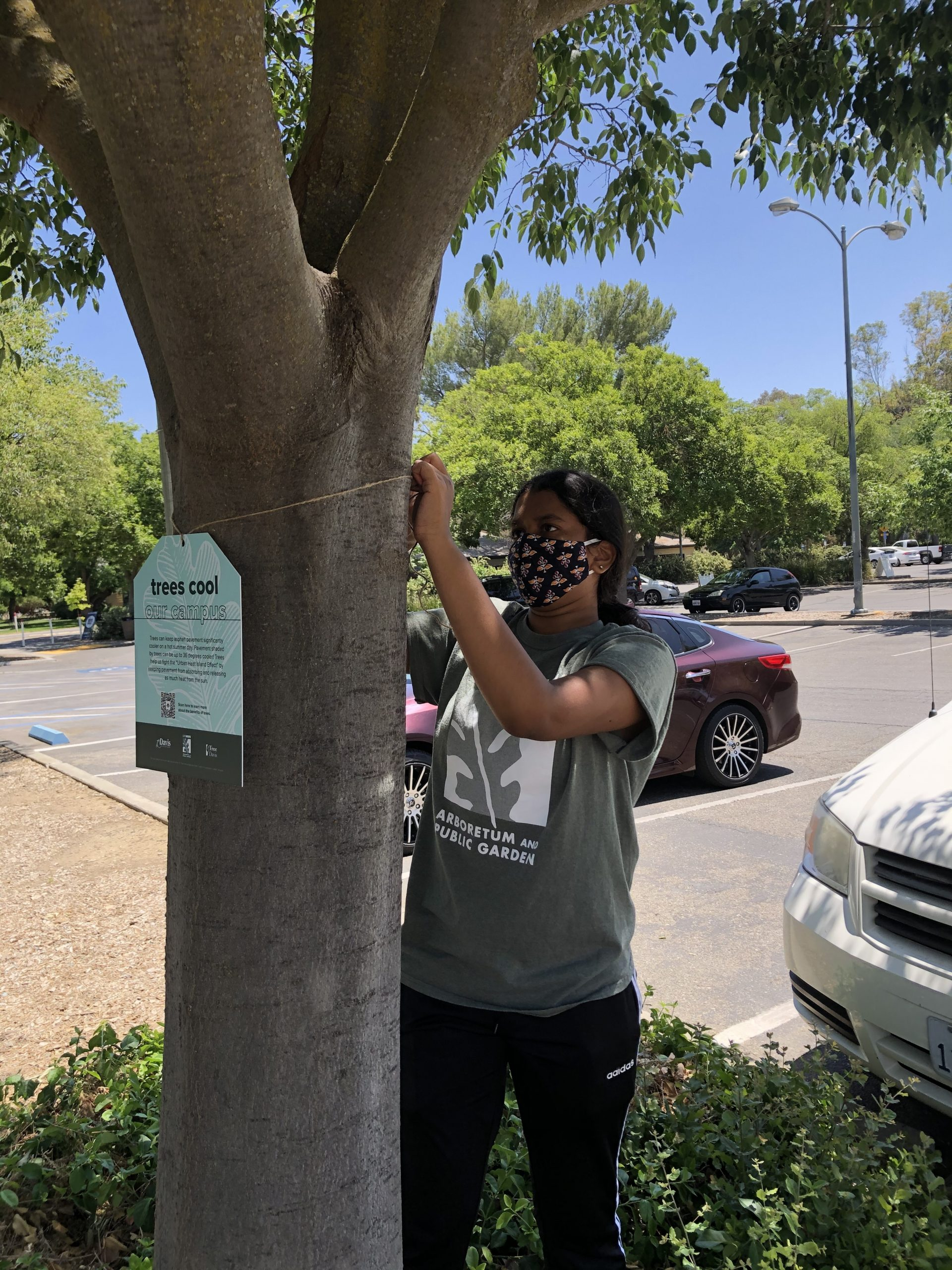 Image of UCDAPG trees 'cool our campus' tag. Photo courtesy of UC Davis.