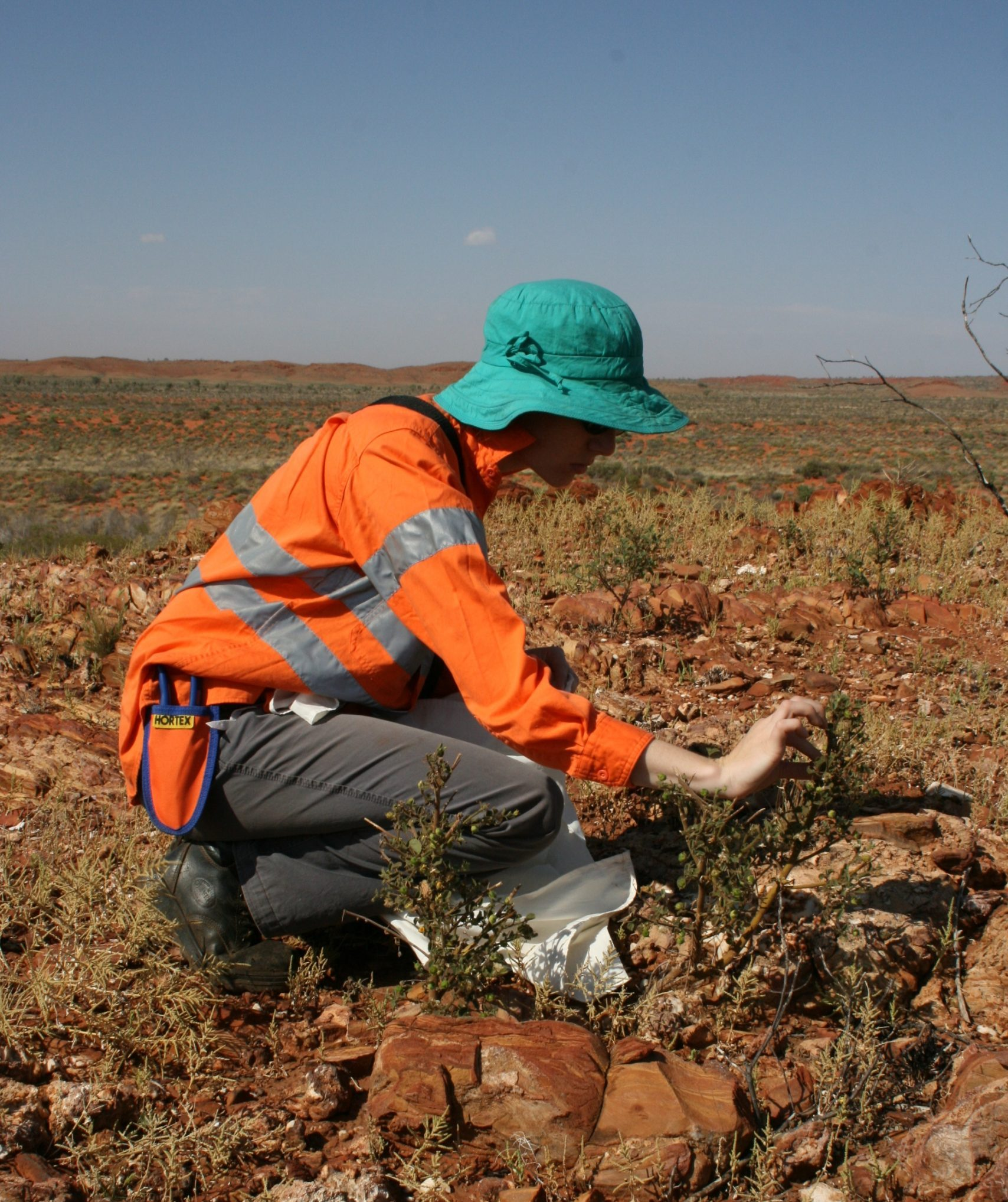 Image of Dr. Lucy Commander Seed Collecting