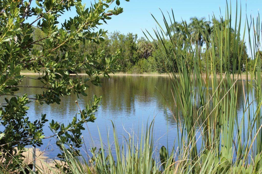 Image of Harvey's Lake at Naples Botanical Garden