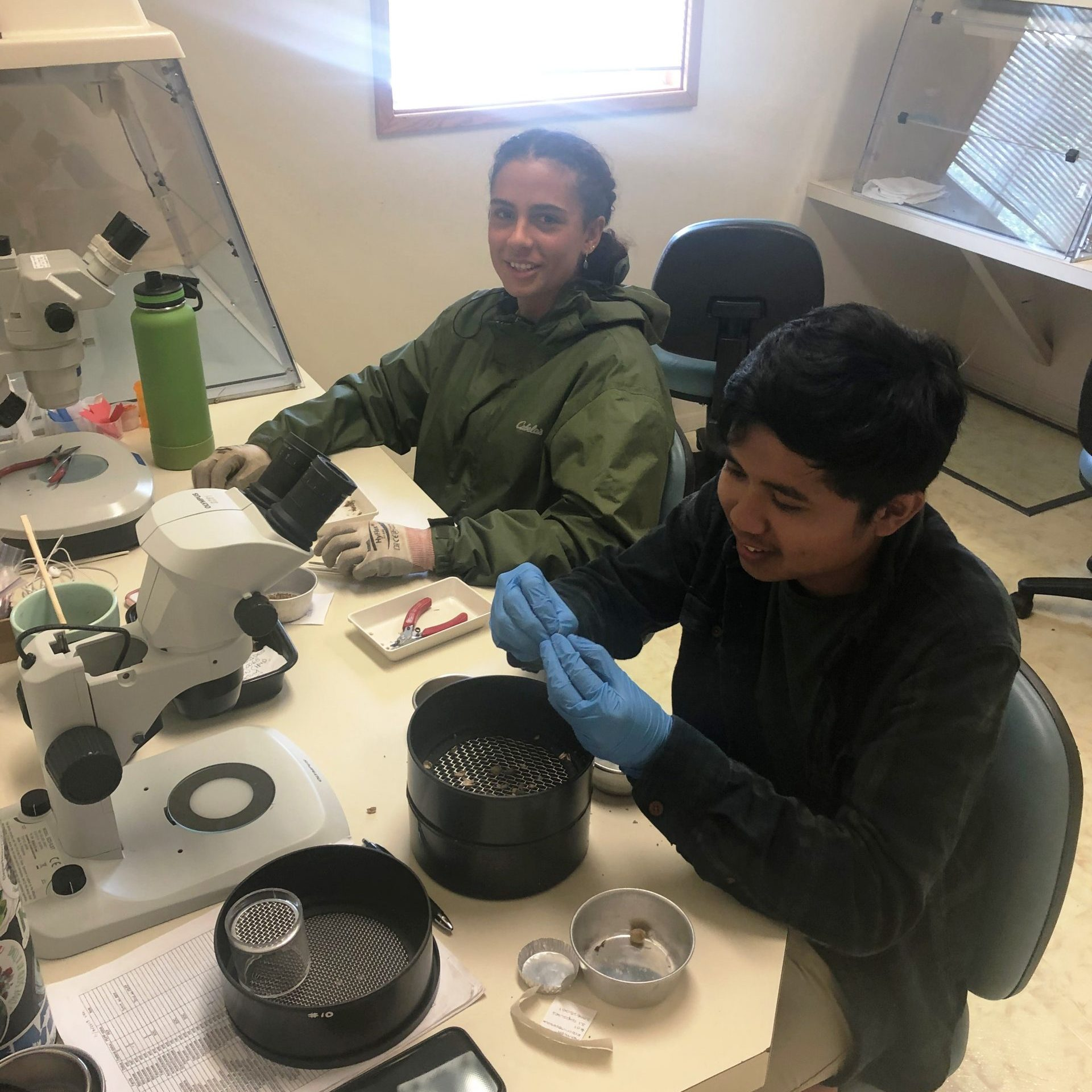 Two interns seated in front of sieves and microscopes cleaning seed.